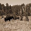 American Bison Vintage by Pamela Peters