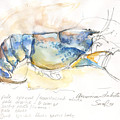 American Blue Lobster by Sarah Madsen