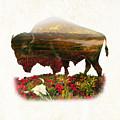 American Buffalo by Gary Grayson