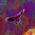 American Crow Flying Ave Fauna  by PixBreak Art