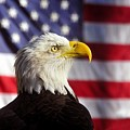 American Eagle by David Lee Thompson