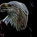 American Eagle by Douglas Barnard