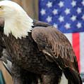 American Eagle by Pauline Darrow