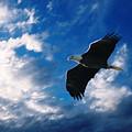 American Eagle by Steve Karol