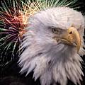 American Eagle by Steve Seeger
