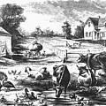 American Farmyard, C1870 by Granger
