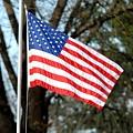 American Flag by Jai Johnson
