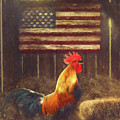 American Flag Rooster by Tim Wemple