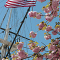 American Flag With Cherry Blossoms by Carol Groenen