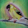 American Gold Finch  by Joanie Leport