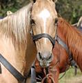 American Horse by Patty Vicknair