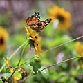 American Lady Butterfly By The Beach by Karen Adams