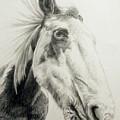 American Paint Horse by Keran Sunaski Gilmore
