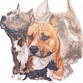 American Pit Bull Terrier Grouping by Barbara Keith