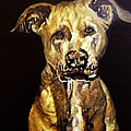 American Pitbull by Fallon Franzen