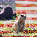 American Prairie Dog by James BO Insogna