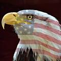 American Pride by Lynn Bauer