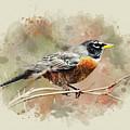 American Robin - Watercolor Art by Christina Rollo