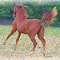 American Saddlebred Filly by Ericamaxine Price