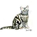 American Short Hair Cat by Carol Veiga