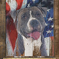 American Staffordshire Terrier Flag Poster 2 by Tim Wemple