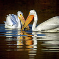 $200 - 20x10 Metal - American White Pelicans 4518-012818-5cr by Tam Ryan