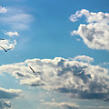 American White Pelicans Flying by Cynthia Woods
