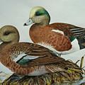 American Widgeons by Elaine Booth-Kallweit
