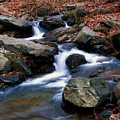 Amicalola Stream by Robert Meanor