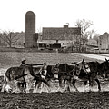 Amish Agriculture  by Olivier Le Queinec