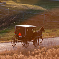 Amish Buggy Afternoon Sun by David Arment
