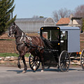 Amish Buggy And High Stepper by David Arment