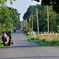 Amish Buggy Sunny Summer by David Arment