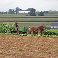 Amish Farm Harvest by Joyce Huhra
