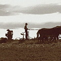 Amish Farmer 2 by Lou Ford