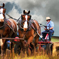 Amish Farmer by Tom Griffithe