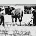 Amish Farming Black And White by John Feiser
