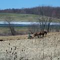 Amish Farming by Sara  Raber