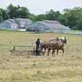 Amish Girl Raking Hay As Painting by David Arment