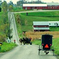 Amish Horse And Buggy Farm by Charlene Cox