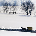 Amish Horse And Buggy In Snowy Landscape by Jeremy Woodhouse