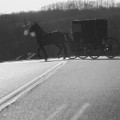 Amish Horse And Buggy In Winter by Dan Sproul