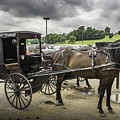 Amish Horse And Buggy by Steven R Breininger