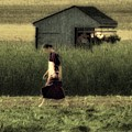 Amish Life by John Feiser