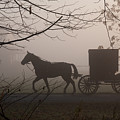 Amish Morning 1 by David Arment