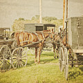 Amish Wagons by Al  Mueller