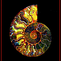 Ammonite Fossil - 8322-3 by Paul W Faust - Impressions of Light
