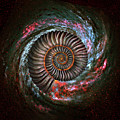 Ammonite Galaxy by Jerry LoFaro