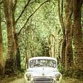 Among Tall Trees by Debra Cox