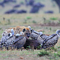 Among The Vultures 2 by Leigh Lofgren